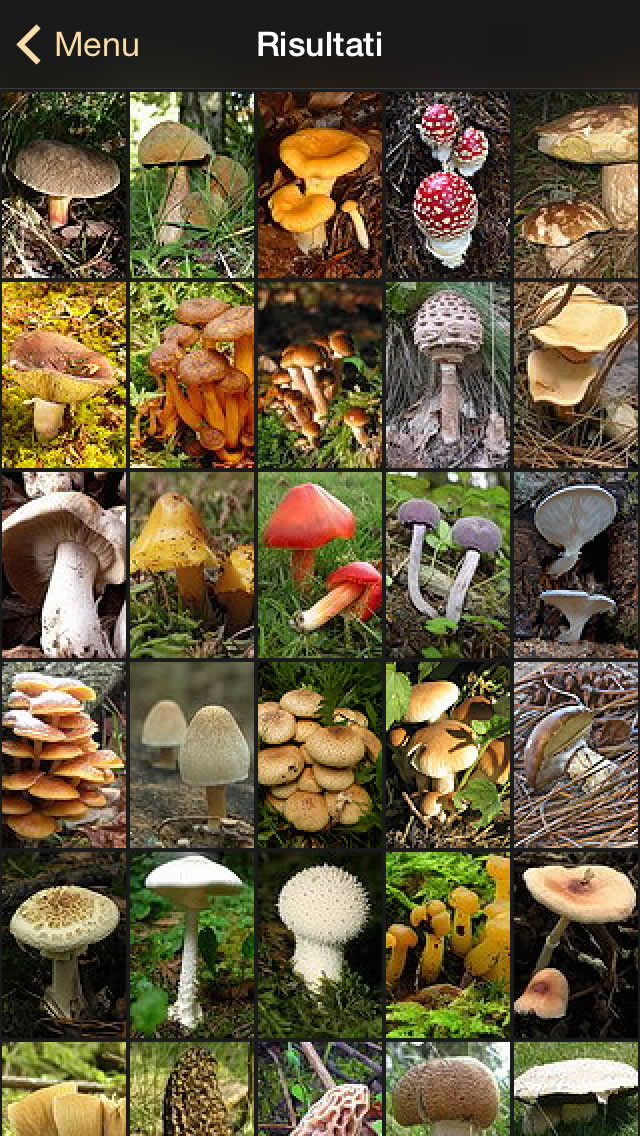 ifunch_sshot_it_3